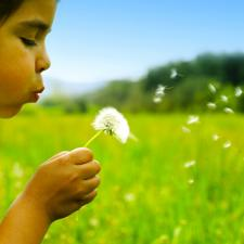 Child with hearing loss wistfully blows dandelion seeds. 